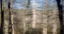 Młodzieżowy Dom Kultury zaprasza na wyjątkową wystawę o lesie