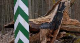 W Puszczy Białowieskiej wybuchło najwięcej pożarów od 12 lat