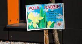 """Wiosną znów zakwitnie nadzieja. Ruszyła 5 edycja kampanii """"Pola nadziei"""" w województwie podlaskim"""
