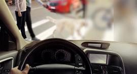 Ponad połowa kierowców nie ma świadomości swojej wady wzroku