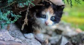 Bezdomne koty zostaną zimą dokarmione