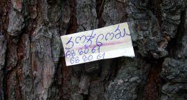 Drzewo to nie słup ogłoszeniowy
