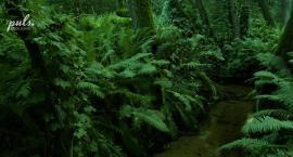 Akumulatory jesienią można sobie naładować oglądając zdjęcia z Podlasia