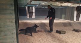 Policjanci szkolili psy służbowe