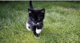 Są takie dni kiedy kot za głośno stoi. Dla wielu to dziś jest ten dzień
