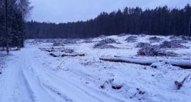 Piła poszła w ruch w Lesie Solnickim