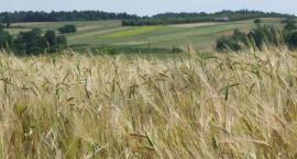 Brak pracowników powoduje likwidowanie gospodarstw ekologicznych