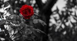 Obywatel Gie Żet: Żałoba narodowa towarem medialnym