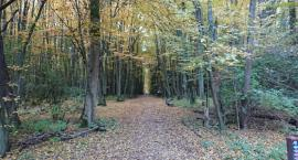 Badacze mówią wyraźnie: czym innym są lasy naturalne, czym innym gospodarcze