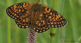 W najstarszym czasopiśmie naukowym pojawił się na okładce motyl z Podlasia