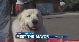 Pies burmistrzem