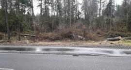 W rezerwacie Krasne trwa wycinka drzew zagrażających bezpieczeństwu