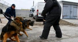 Policjanci przeszkolili psy, które pomagają im na służbie