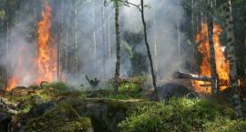 Lasy na Podlasiu są potwornie suche