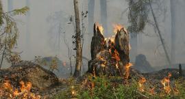 Na Podlasiu potrzebny jest deszcz. Zagrożeniem dla lasów są nie tylko pożary