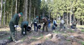 Sadzenie lasu w stylu międzynarodowym