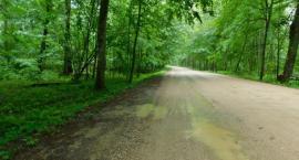Lecą Wióry: Leśnik drogą maszerował