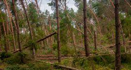 Nawałnice spowodowały w lasach ogromne straty