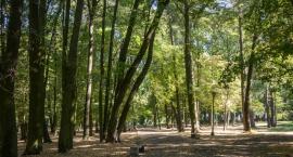 Lasów ci w Białymstoku dostatek?