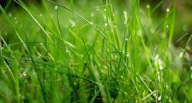 Jak sobie radzi roślina, by żyć?
