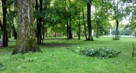 Pora zadbać o drzewa