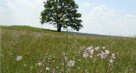 W dolinie górnej Narwi trwa inwentaryzacja siedlisk
