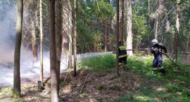 Strażacy coraz częściej interweniują w Puszczy Białowieskiej