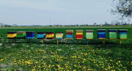 W polskich miastach pojawia się coraz więcej uli dla pszczół