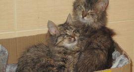 Na ratunek małym kociakom