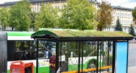 Przy Placu NZS powstają pierwsze w mieście zielone przystanki