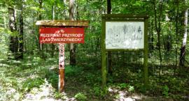 Wspólnymi siłami posprzątają Las Zwierzyniecki