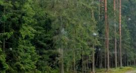 Niedaleko Białegostoku powstanie Szlak Bioróżnorodności