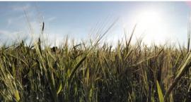 Rozpoczęła pracę komisja do szacowania strat wywołanych suszą