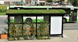 Będzie trzeci zielony przystanek w Białymstoku. Mieszkańcy sami go wybiorą