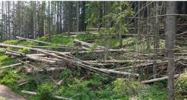 Susza i korniki w lasach powodują, że rośnie zagrożenie pożarowe