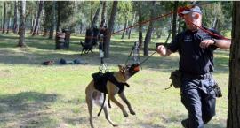 Psiaki na służbie w akcji - doskonaliły swoje umiejętności