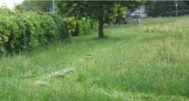 Obywatel Gie Żet: Nie każde zielsko daje tlen (ważna wiedza ekologiczna)