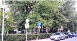 Duże i dorodne drzewa z ulicy Parkowej mogą zostać wycięte