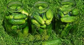 Ogórek zielony ma garniturek i… swoje święto w Kruszewie