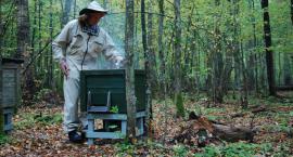 Będziemy mieli w Białymstoku prawdziwe miejskie pszczółki