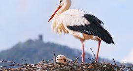 Śledzimy wiosnę ze Spring Alive wspólnie z Towarzystwem Ochrony Ptaków