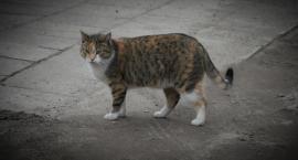 Trzeba nakarmić białostockie koty