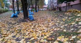 Sprzątanie liści na posesji to twój obowiązek. Ale… warto ich trochę zostawić