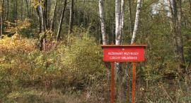 Nadleśnictwo Bielsk Podlaski właściwie opiekuje się powierzoną mu przyrodą
