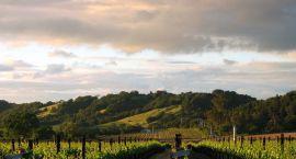 Szlakiem wina po Europie – podpowiadamy, które miejsca warto zobaczyć