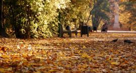 Liście w tym roku nie będą sprzątane i będą leżały w białostockich parkach