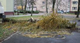 Premier Morawiecki ratuje w Białymstoku drzewa przed wycinką