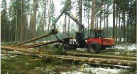 Sosna i świerk to najczęściej kupowane drewno z podlaskich lasów