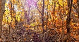 Lecą wióry: Lasy Państwowe też są w ruinie