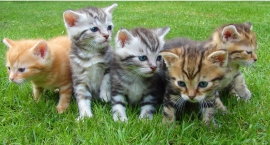 Białystok kolejny raz zaopiekuje się bezdomnymi kotami
